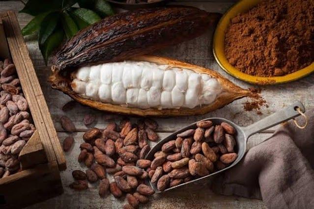 Negara Penghasil Coklat